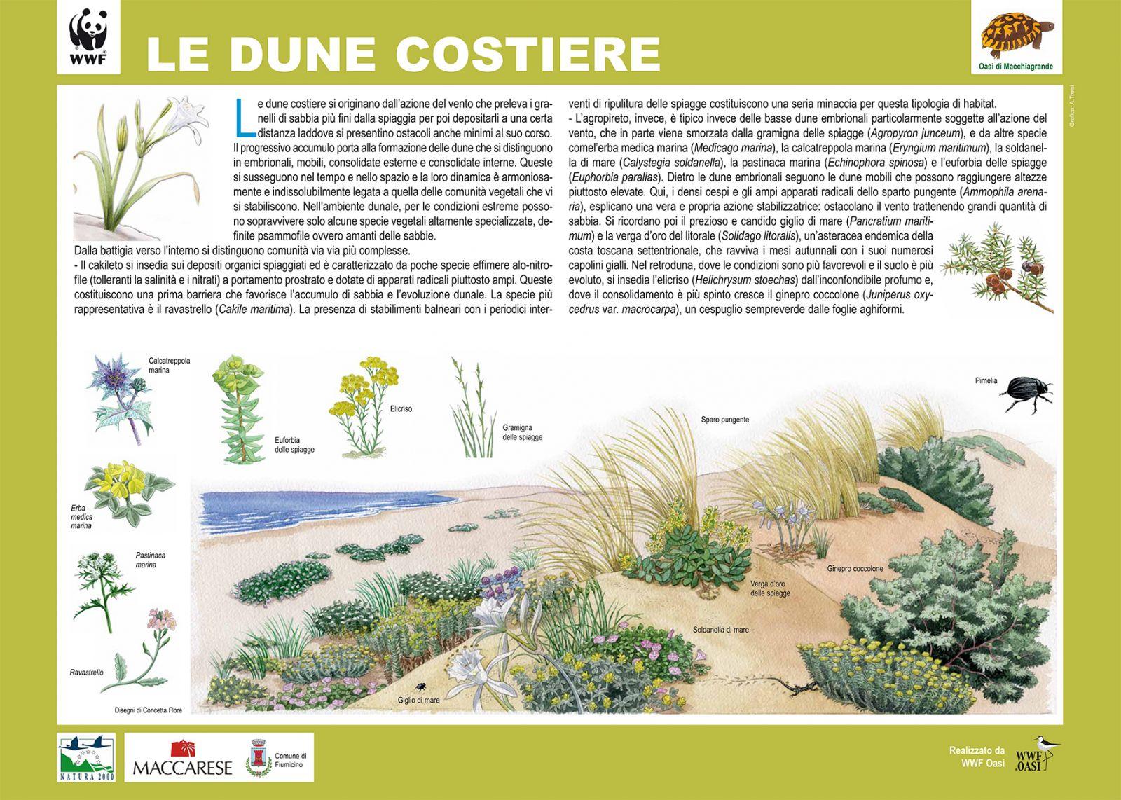 Materiale informativo WWF sulle Dune del Campeggio di Capalbio